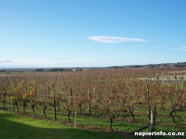 Vineyards near Napier