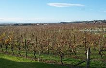 Vineyards near Napier, Hawkes Bay